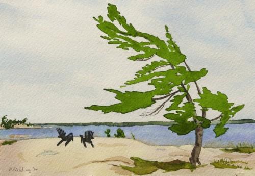 C5 - Killbear Park - Windswept pine, Kilcoursie Bay - Pamela Fielding