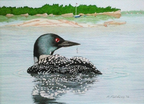 Loon at Killbear