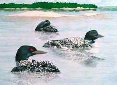 Three Loons at Killbear